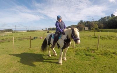 Happy and Relaxed Horse Training