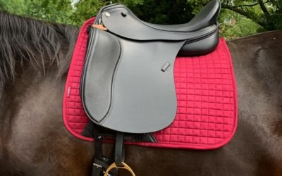 Adjustable Dressage Saddle – The Avante